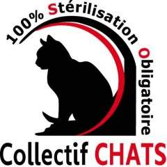 Collectif Chat