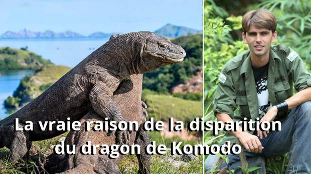 La vraie raison de la disparition du dragon de Komodo